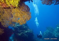 Reefs of Cozumel - Palancar Gardens reef