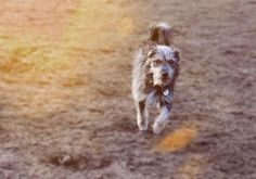 Loui Terrier-Mischling | Pawshake Hamburg