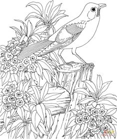 American Robin And Mountain Laurel Connecticut State Bird Flower Coloring Page