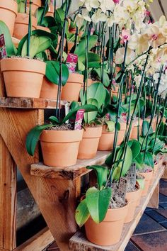 Glorious Enjoy Life With Your Own Flower Garden Beautiful Easy Ideas. Enjoy Life With Your Own Flower Garden Beautiful Easy Ideas. Indoor Orchids, Orchids Garden, Indoor Flowers, Garden Plants, Indoor Plants, Indoor Outdoor, Potted Plants, Roses Garden, Fruit Garden