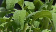 Összegyűjtöttük a február végéig elvethető és ültethető kiskerti és szobai növényeket. Gyümölcsök és zöldségek, hideg- és melegágyban.