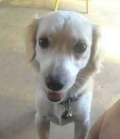 LOST DOG: 08/22/2017 - Palm Springs North, Florida, FL, United States. Ref#: L35889 - #CritterAlert #LostPet #LostDog #MissingDog