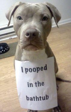 My dog left a surprise (dog,pooped,bathtub)