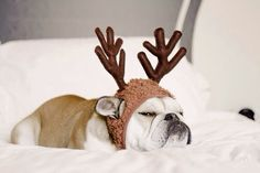 Sleepy Reindeer