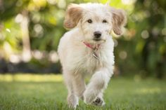 Common Mistakes and Great Tips to Train Your Puppy to Come