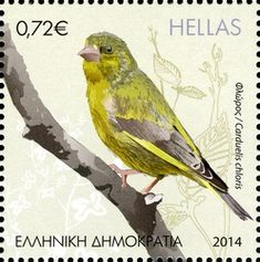 European Greenfinch stamps - mainly images - gallery format Greenfinch, World Birds, Fabric Stamping, Vintage Stamps, Stamp Collecting, Printing On Fabric, Greece, Art Photography, Gallery