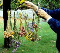 How to create beautiful dried flowers from your garden.