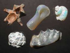 Opalised fossils, top left - turtle vertebra, top middle - dinosaur leg bone, top right - gastropod (water snail), bottom left - pine cone, bottom right - lungfish tooth plate.  Lightning Ridge, Australia