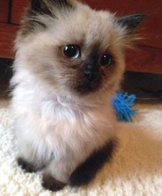 oh, hello adorable kitten!
