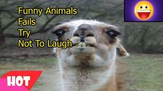 Funny Animals Fails 16   Try Not To Laugh Challenge   Compilation Vines