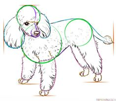 How to draw a french poodle | Step by step Drawing tutorials Más