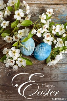 Happy Easter background with blue painted easter eggs, white flowers on wood background - Buy this stock photo and explore similar images at Adobe Stock Easter Backgrounds, Wood Background, Royalty Free Photos, Happy Easter, White Flowers, Easter Eggs, Glass Vase, Stock Photos, Create