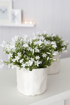Vakker og yndig hvit Campanula i grow-in selvvanningspotte: http://www.mestergronn.no/blogg/grow-in-potter-i-nye-farger/