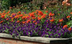 De tuinkalender voor mei en juni