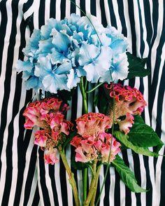 """daria_miazhevich: """"Flowers from husband . . . Кто знает что это за розовые цветы? Сверху они похожи на мозги В букете ещё зеленые веточки сзади листьев которых пупырки!  Фото для цветочной ниндзя @lsdivo  #vsco #vscoflowers #vscominsk #vscobelarus"""""""