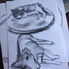 Pensei que estava sem papel Coloquei a gata e a cachorra apertadas numa folha s Hehehe dwgdaily charcoal sketch