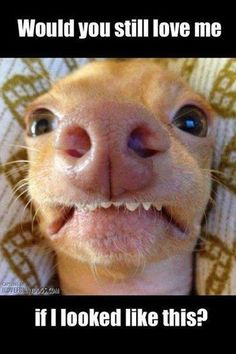 I've totally said this to Ryan and made this face. This dog never gets old.