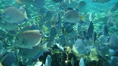 Best snorkeling ever - Buck Island, St Croix