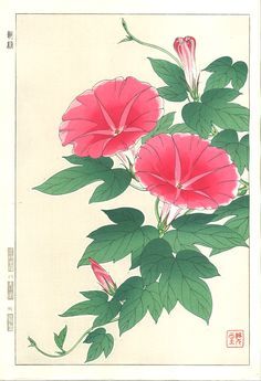 Kawarazaki Shodo - F61 Asagao (Morning glory)