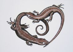 lizard heart - ink drawing of courting lizards
