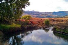 De Molen - Clarens Accommodation. Picnic Spot, Picnic Area, White River Rafting, Fishermans Cottage, Cosy Lounge, Free State, Have A Shower, Thatched Roof, Wooden Decks