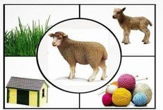 Farm Animals Preschool, Animal Activities For Kids, Montessori Activities, Education And Development, Kids Education, Animals And Their Homes, Hobbies For Adults, Kids Reading Books, Flashcards For Kids