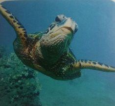 Turtle, Salt, Animals, Turtles, Animales, Animaux, Tortoise, Salts, Animal