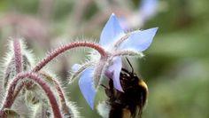 Piante ornamentali velenose per le api, l'allarme di Greenpeace nel dossier Eden tossico