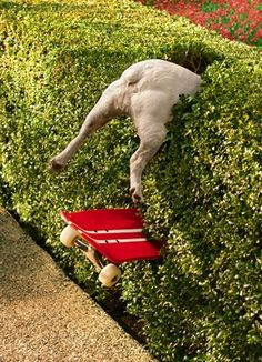 Dog humour: At a certain age, everything is an extreme sport!