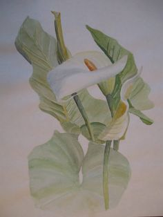 Calla Lily watercolor by Michelle Heber Calla Lily, Paintings, Watercolor, Flowers, Art, Log Projects, Watercolors, Watercolor Painting, Paint