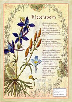 Rittersporn … – Best Garden Plants And Planting Healing Herbs, Medicinal Plants, Dulux Valentine, Delphiniums, Plant Illustration, Kraut, Garden Plants, Shade Garden, Amazing Gardens
