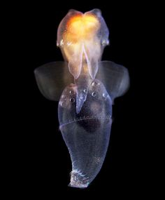 Dark matter photography - deep sea marine life that previously couldn't be photographed. These are really cool!