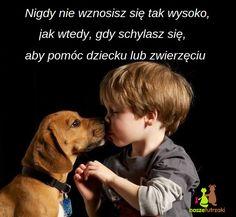 Nigdy nie wznosisz się tak wysoko, jak wtedy, gdy schylasz się, aby pomóc dziecku lub zwierzęciu. Motto, Life Lessons, I Love You, Texts, Lettering, Humor, Quotes, Inspiration, Animals
