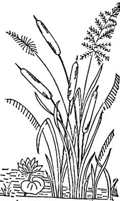 free printable coloring pages cattails plants   Cattails Vector Cattail Silhouette Stock   SCAN N CUT ...