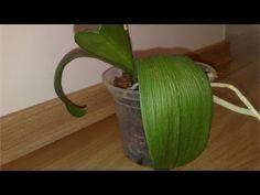 Curso Cultivo de Orquídeas para Fins Comerciais ou Hobby - Como Recuperar uma Planta - Cursos CPT - YouTube