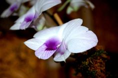 My Work; Orchid love