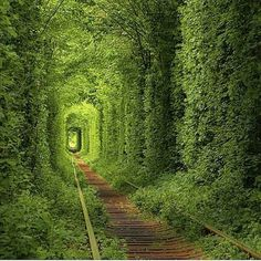 The tunnel of love 💚😍Courtesy of @traveljunkie_xl! Tag someone you love!
