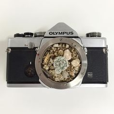 The sweetest gift ever for a #desert #photographer  #cactuscamera This adorable old school camera was repurposed to grow our new cactus friend.