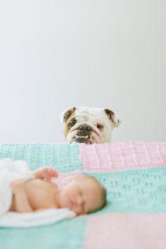 sweet newborn session with English Bulldog