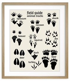 Field Guide Nursery Art - Animal Tracks art print features wooodland animal footprints, deer, bear, skunk, fox and more. Woodland Nursery art #nursery