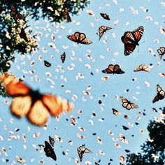 I wanna Take Photos of a swarm of butterflies...