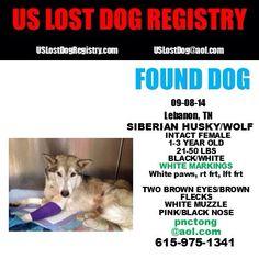 #Founddog 9-8-14 STRAY #Lebanon #TN #SiberianHusky mix 1-3 yr female 615-975-1341 USLDR