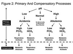 Image detail for -arterial blood gas analysis arterial blood gas analysis abg blood gas ...