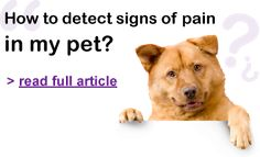 Can you detect pain in your #pet? Read this article for tips!