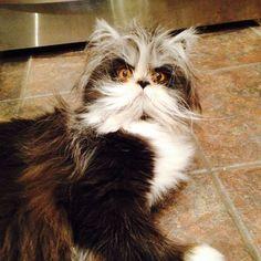 Atchoum the cat