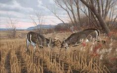 Battling Bucks - Whitetail Deer Prints by Michael Sieve at ArtPrints.com