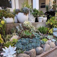 Porch goals @addytude #succulents #succulent #succulove #thesucculentsource