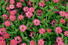 Annuals Garden | Gardening Tips | Garden Guides