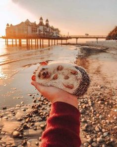 Cute Overload: Internet`s best cute dogs and cute cats are here. Aww pics and adorable animals. Super Cute Animals, Cute Little Animals, Cute Funny Animals, Cute Dogs, Cute Babies, Funny Cats, Cutest Animals, Happy Hedgehog, Hedgehog Pet
