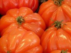 BeefSteak Tomatos Seeds - Tomatoes - SeedWise.com